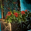 Lattice Planter with Red Petunias.png