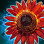 Crimson Sunflower.png