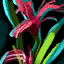 Preserved Red Iris.png