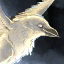 Mini Svelicht the Fog Raven.png