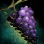 Bunch of Rare Grapes.png