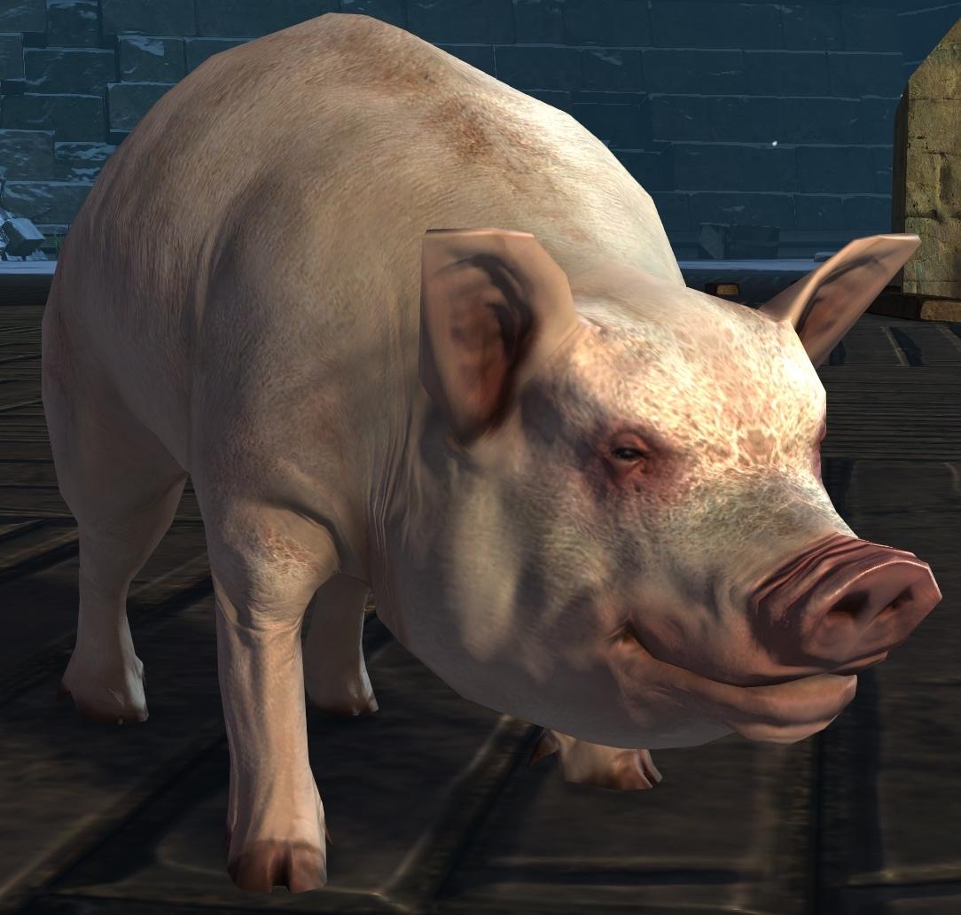 Juvenile Pig   Guild Wars 211 Wiki GW211W