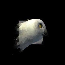 Juvenile_Owl.png
