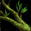 Darkened Vine.png