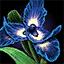 File:Ascalonian Royal Iris.png