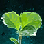 Germinate Strawberry.png