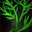 Dill Sprig.png