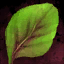 Spinach Leaf.png