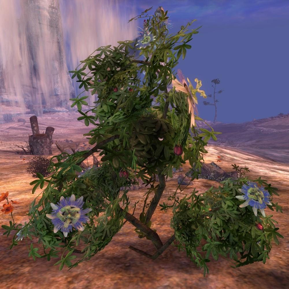 Blooming Passiflora Guild Wars 2 Wiki Gw2w