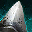 Enormous Megalodon Tooth.png