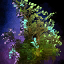 Basic Shrub.png