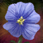 Flax Blossom.png