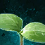 Germinate Butternut Squash.png