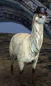 Lost Fancy Llama Guild Wars 2 Wiki Gw2w