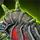 Black Citadel Engine.png