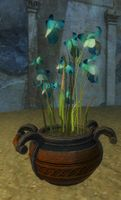 Potted Blue Orchid.jpg