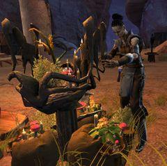 Amira - Guild Wars 2 Wiki (GW2W)