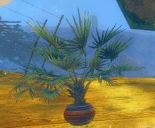 Potted Lady Palm.jpg