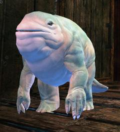 Poobadoo - Guild Wars 2 Wiki (GW2W)