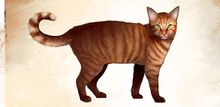 Mini Orange Tabby Cat concept art.jpg