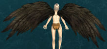 Black Feather Wings Glider.jpg