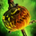 Pumpkin Smasher.png
