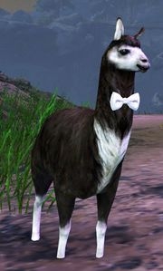 Lost Fancy Black Llama Guild Wars 2 Wiki Gw2w