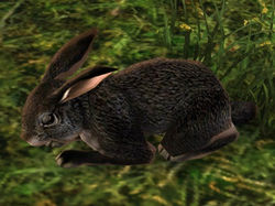 Rabbit (Black).jpg