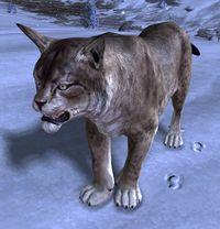 juvenile lynx guild wars 2 wiki gw2w