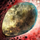 Mottled Canyon Griffon Egg.png