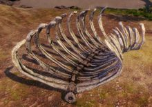 Primordial Leviathan Rib Cage- Right Curved.jpg
