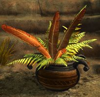 Potted Gold Fern.jpg