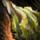 Piece of Mordrem Thrasher Gas Bladder.png